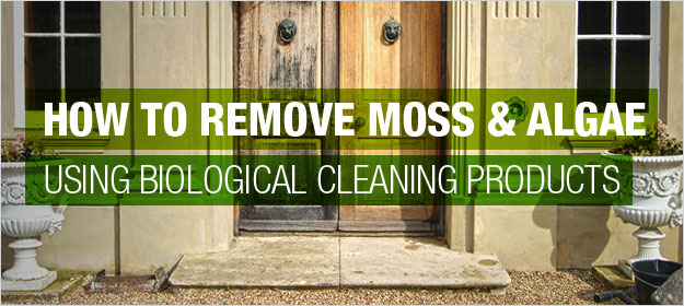 How To Remove Moss And Algae Using Biological Cleaning Products