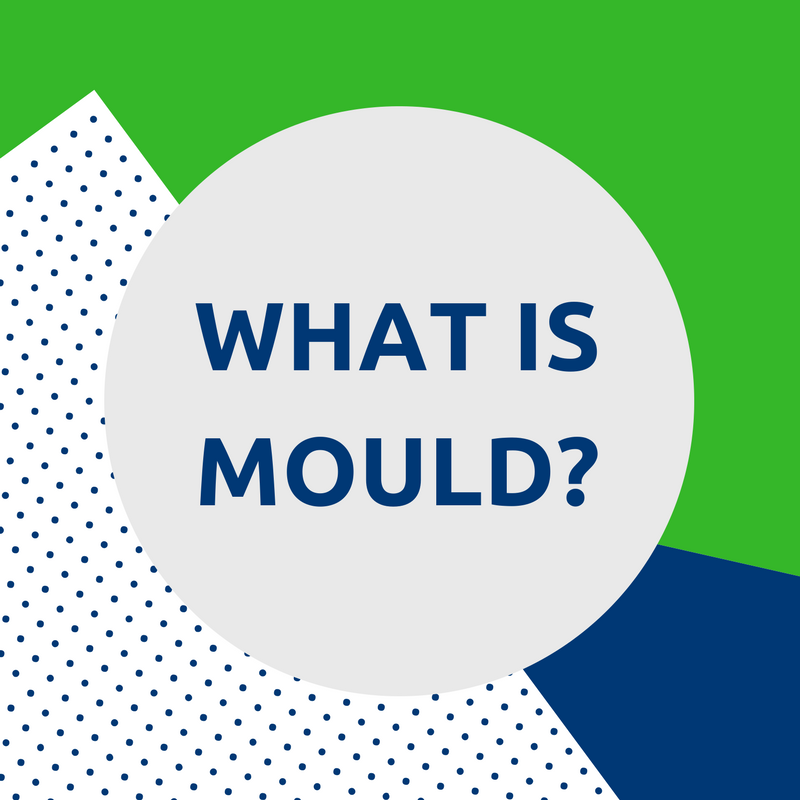 what is mould