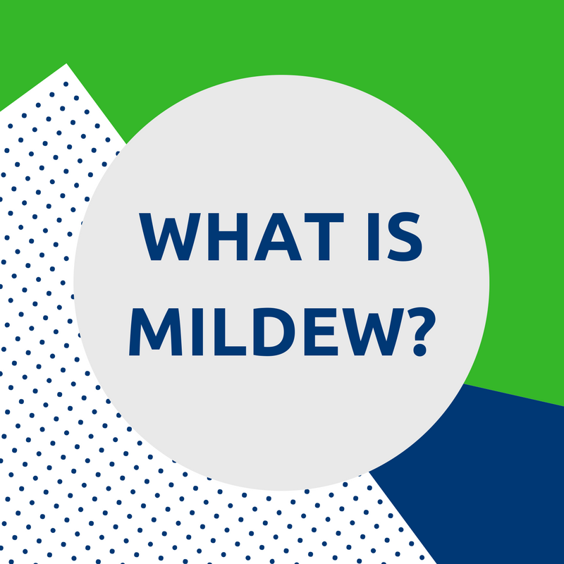 what is mildew