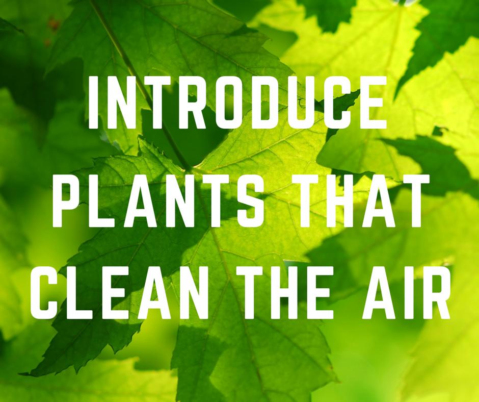 aircleaningplants